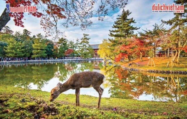 Những địa điểm ngắm mùa thu đẹp nhất tại Hàn Quốc, Nhật Bản - 2