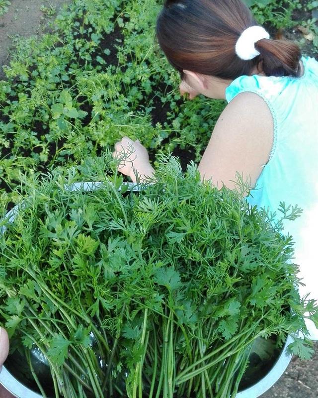 Gia đình chị trồng được đủ các loại rau quả của Việt Nam như cà chua, khoai lang, bí, bầu, rau mồng tơi, rau thơm các loại. Khu vườn của gia đình chị là niềm mơ ước của nhiều người Việt xa xứ.