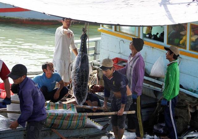 Tỉnh Phú Yên đã có kế hoạch hỗ trợ hơn 61 tỷ đồng để ngư dân yên tâm sản xuất trên vùng biển xa