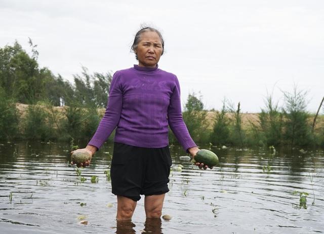 Bà Trần Thị Loan ở thôn Tân (xã Quảng Nham, Quảng Xương , Thanh Hóa) cố gắng thu hái dưa hấu bị ngập nước do ảnh hưởng của cơn bão số 3. Tuy nhiên, số dưa này cũng không thể bán được vì đã bị hỏng do ngấm nước, chỉ để làm thức ăn cho gia súc.