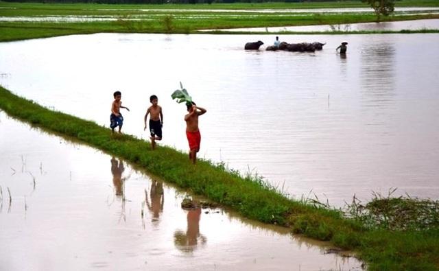 Chim quốc và mùa nước lụt là những ký ức in đậm tuổi thơ miền trung du, đồng bằng Bắc Bộ. (Ảnh: internet)
