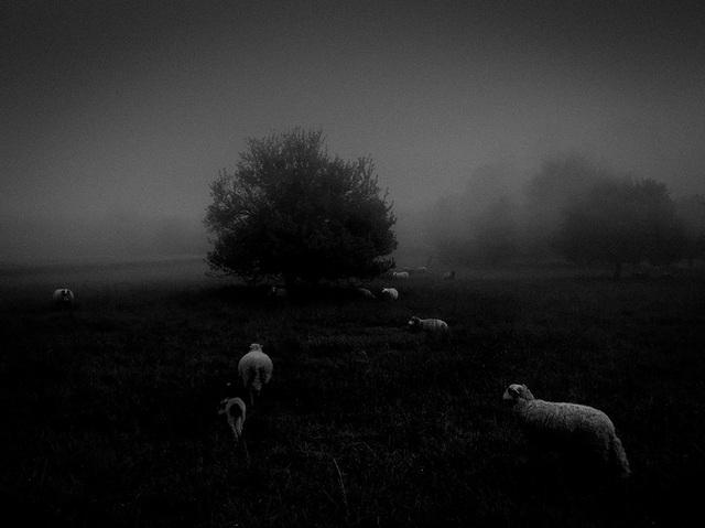 """Bức ảnh chụp sương mù trong buổi sáng sớm bằng iPhone 6S của Sukru Mehmet Omur (Pháp) đã giành giải nhất trong hạng mục ảnh """"Thiên nhiên"""""""
