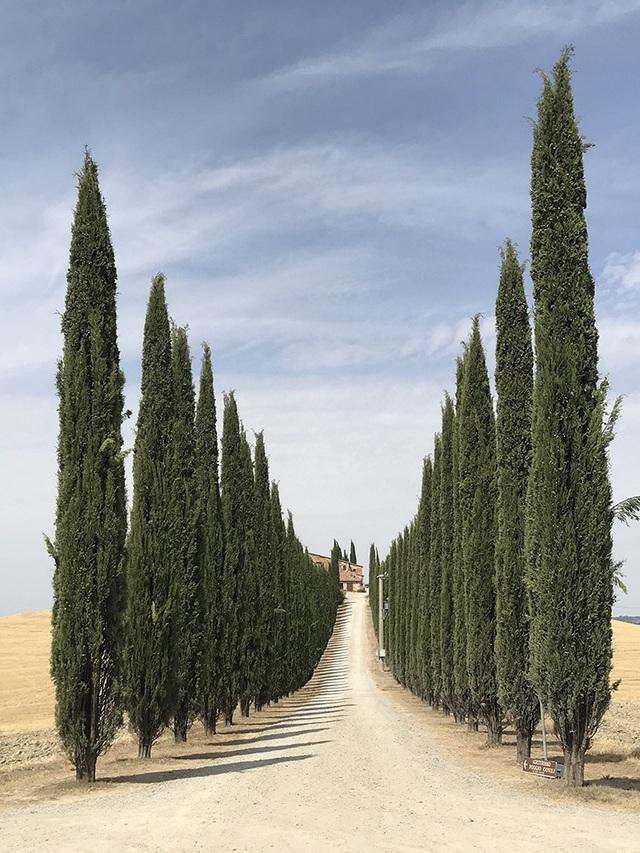 """Bức ảnh do Lidia Muntea (Romania) chụp tại miền trung nước Ý bằng iPhone 7 Plus đã giành chiến thắng ở hạng mục """"Cây"""""""