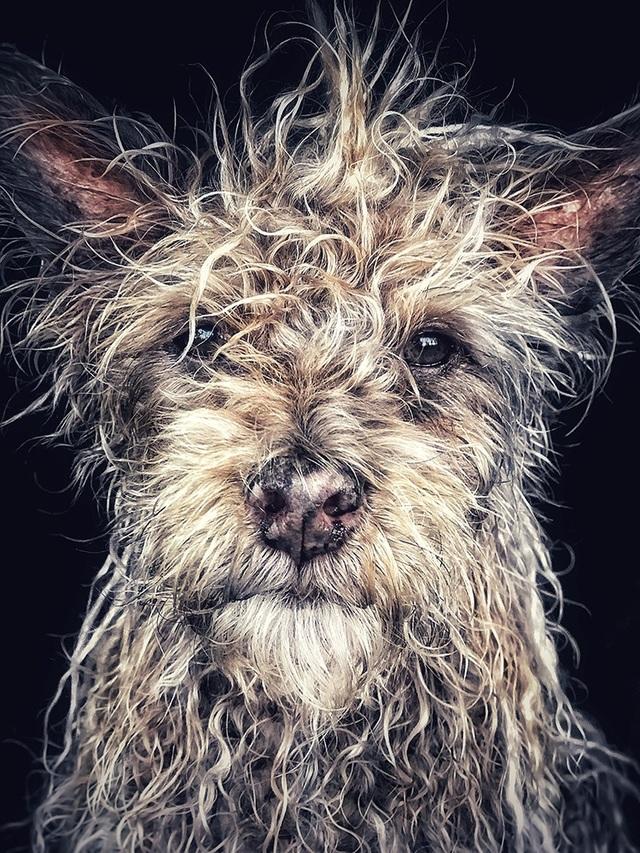 """Bức ảnh chụp chú chó có tên Django, sinh ra và lớn lên bên trong một ngôi chùa ở tỉnh Hồ Nam (Trung Quốc), được nhiếp ảnh gia người Mỹ Robin Robertis chụp bằng iPhone 7 Plus đã giành giải nhất trong hạng mục """"Động vật"""""""