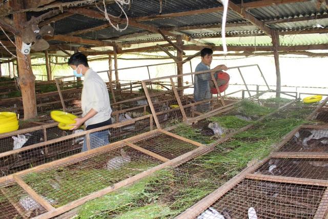 Công nhân đang vệ sinh chuồng trại và thay thức ăn cho thỏ