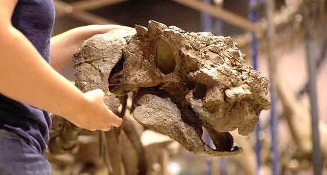 Hộp sọ xù xì của khủng long ankylosaurid - Ảnh từ Phase 2 Productions.