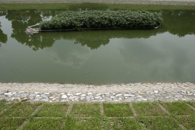 Nước sông Tô Lịch chuyển màu xanh như nước hồ Gươm - 8
