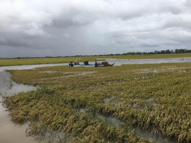 Những cánh đồng lúa ngập chìm trong nước.