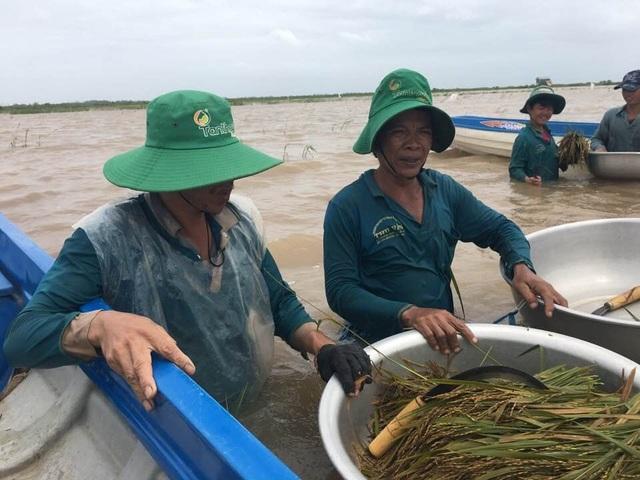 Mặc dù được sự hỗ trợ của chính quyền nhưng do nước ngập quá sâu nên có nhiều diện tích lúa bị mất trắng