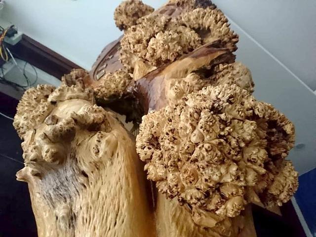 Vẻ xù xì của thân cây được giữ lại nguyên vẹn, giống như những tán lá.