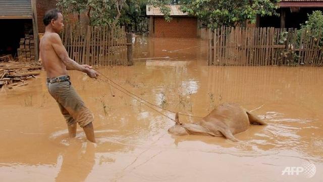 Xác động vật trôi nổi giữa lớp bùn đỏ sau sự cố vỡ đập (Ảnh: AFP)