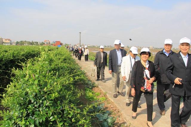 Bác Phú (áo trắng) trên đường thăm vùng trồng Dây thìa canh chuẩn hóa của công ty Nam Dược