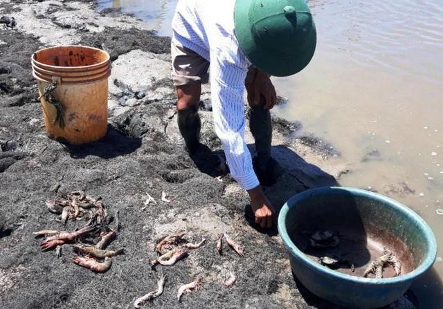 Nguyên nhân gây ra tôm chết là tôm nuôi có mang mầm bệnh đốm trắng, khi điều kiện môi trường thay đổi (đặc biệt thời tiết nắng nóng, nhiệt độ nước cao) khiến bệnh đốm trắng bùng phát.