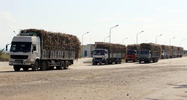 Tỉnh Phú Yên đang đứng trước nguy cơ tồn đọng 100 nghìn tấn đường
