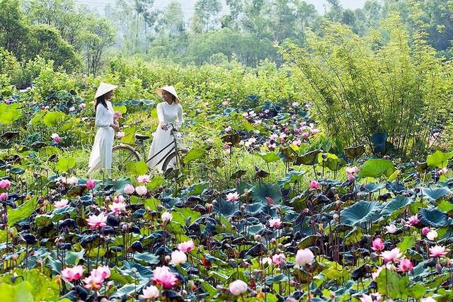 Thì ở các làng quê, nơi vẫn còn những đầm sen mộc mạc, dân dã lại luôn sẵn lòng chào đón những ai yêu mến vẻ đẹp thuần khiết của loài hoa tinh túy này