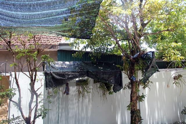 Nhiều giò lan còn được che chắn tới 2 lớp lưới nhằm hạn chế tối đa ánh nắng rọi vào