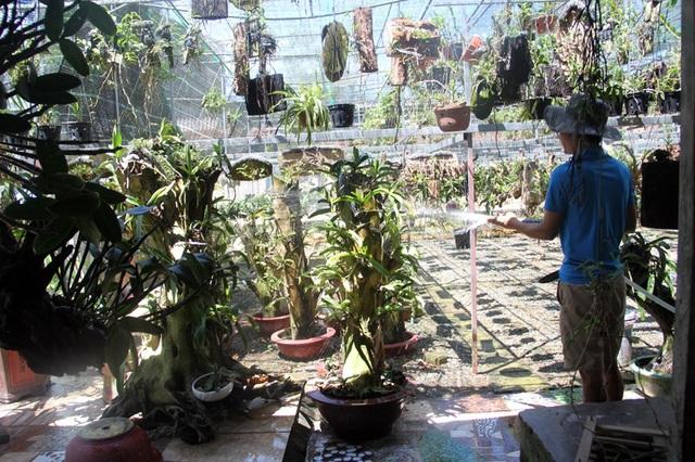 Dù mất ăn mất ngủ chăm vườn lan, tuy nhiên, Long cho biết, đợt nắng nóng làm ảnh hưởng khá nhiều đến khả năng sinh trưởng của lan. Nếu thời tiết không nhanh chóng hạ nhiệt, thì vườn lan chắc chắn sẽ bị ảnh hưởng - Long nói.