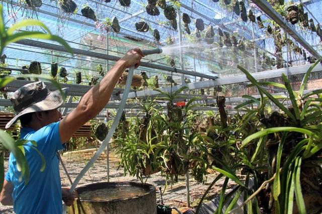 Việc tưới nước cũng phải đậm hơn, đảm bảo giá thể phải thấm nước tránh nắng nóng gây hại đến rễ và thân.