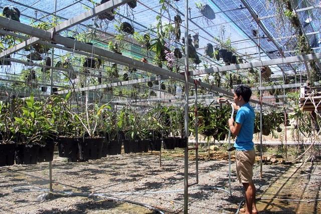 Theo anh Long, nước tưới là quá cần thiết cho lan, đặc biệt là đối với lan trồng trên giá thể gỗ lũa trong những ngày nắng nóng đỉnh điểm này. Thế nhưng, không phải lúc nào cũng có thể tưới nước, nếu tưới không khéo cây sẽ úng nước, dẫn đến héo và thối rễ.