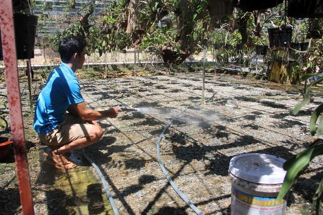 Một giải pháp khác để chống nóng cho vườn lan mà anh và gia đình phải tăng cường thực hiện trong những ngày nắng nóng này để làm mát phần nền đất phía dưới. Để tạo độ ẩm, một lớp sỏi hoặc đá xay được lót phía dưới. Nước liên tục được tưới để đảm bảo độ ẩm, tạo không gian thoáng mát, đẩy lùi sức nóng.