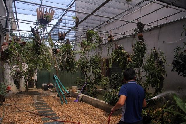 Anh Phong cho biết, thời tiết tiêu cực nên việc chăm vườn lan tốn nhiều công sức, thời gian hơn. Ngoài dàn tưới tự động anh còn phải thiết kế thêm vòi tưới thủ công.