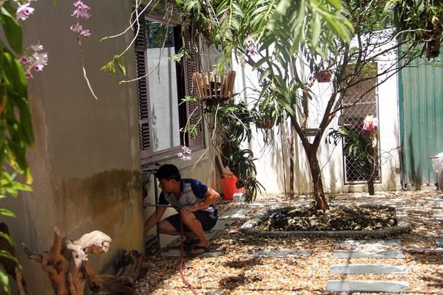 Là một người đam mê lan, anh Trần Đình Phong, chủ vườn lan trị giá hàng trăm triệu đồng cũng đang đứng ngồi không yên trước cái nóng như thiêu đốt ở miền Trung. 12h trưa, anh Phong không chợp mắt sau buổi làm việc mệt mỏi ở cơ quan, mà tập trung vào việc làm mát vườn lan trước cái nóng bủa vây.
