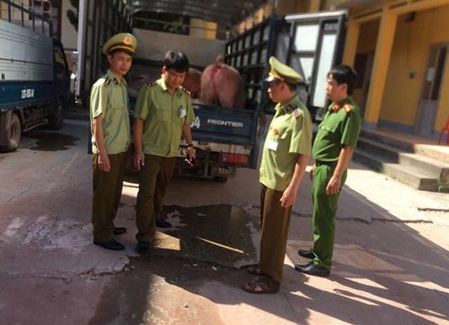 Lực lượng chức năng bắt giữ 2 xe ô tô vận chuyển 3 tấn lợn nhập lậu Trung Quốc