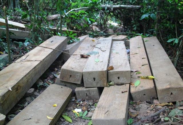 Cạnh lán trại có nhiều tấm gỗ xẻ.