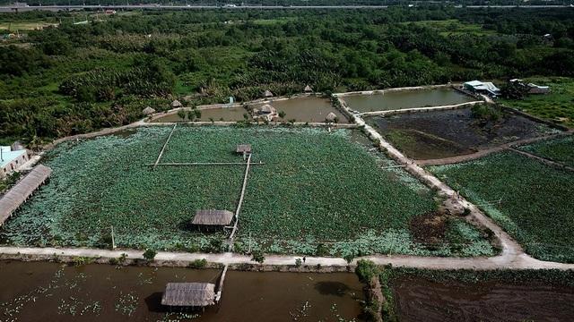 Đầm sen Tam Đa, quận 9, TPHCM nổi tiếng vì vẻ đẹp và sự bình yên trong lòng thành phố.
