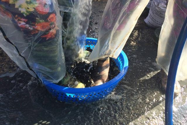 Kiếm hàng chục triệu đồng nhờ nuôi vẹm làm thức ăn cho tôm hùm - 4