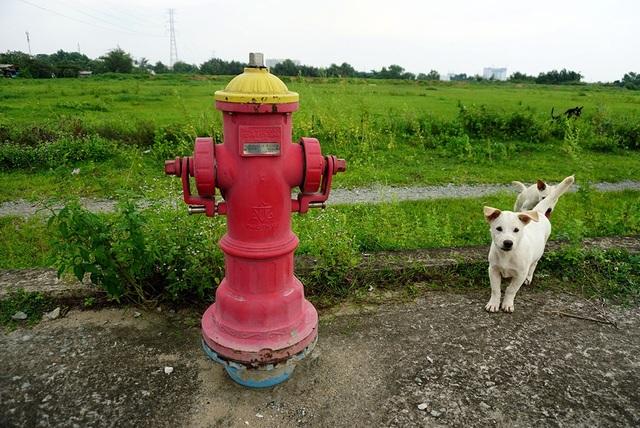 Một trụ nước cứu hỏa lắp đặt trong dự án để phục vụ cư dân nhưng người dân thì vẫn chưa vào ở nhiều.