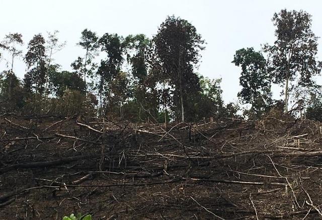 Tại Thanh Hóa, nguy cơ cháy rừng đang đặt trong tình trạng báo động. (Ảnh: Duy Tuyên).