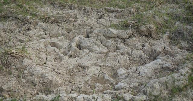 Mặt ruộng khô khốc vì không có nước. (Ảnh: Duy Tuyên).