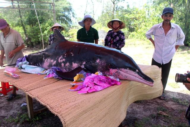 Người dân thôn Trung Phương đưa cá voi vào lăng chuẩn bị an táng