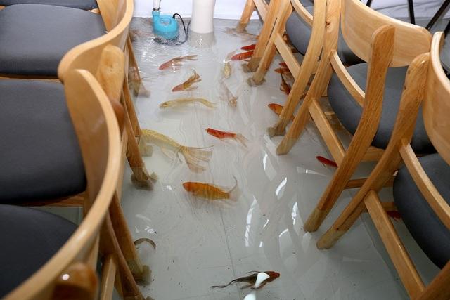 Hàng trăm con cá chép bơi lội dưới nước.