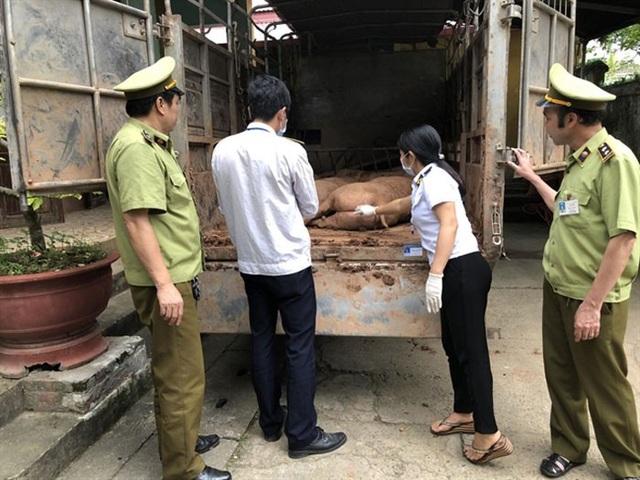 Cơ quan chức năng liên tục bắt giữ các vụ nhập lậu thịt lợn Trung Quốc về Việt Nam (ảnh: ANTĐ)