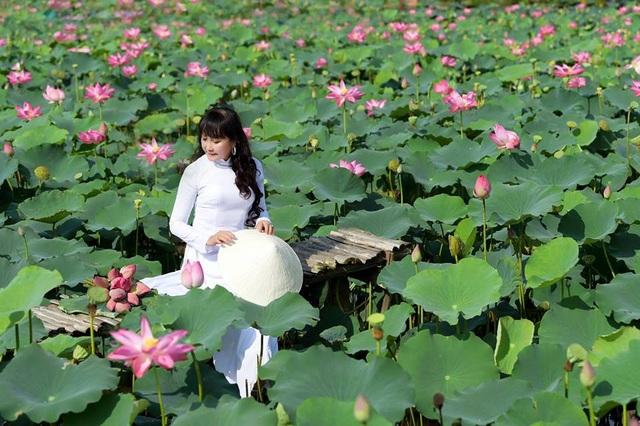 Giới trẻ phát sốt với đầm sen đẹp ngỡ ngàng giữa lòng Sài Gòn - 2