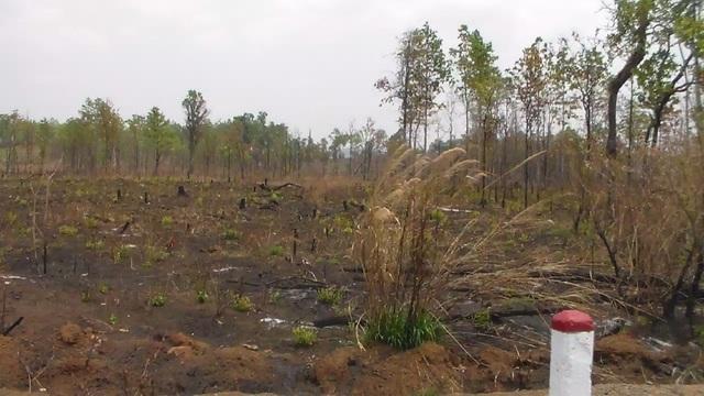 Nhiều đám rừng của BQL bị thiêu rụi, đốt sạch