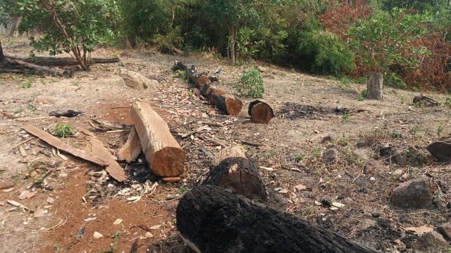 Tình trạng đốt phá cây rừng vẫn còn diễn ra tại BQLR phòng hộ Ia Grai