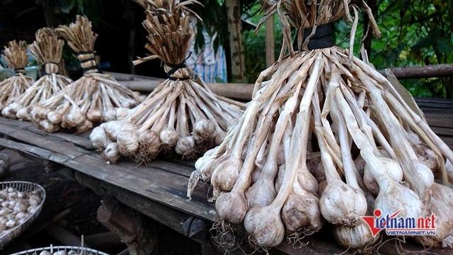 Tỏi Yên Châu là đặc sản lựa chọn hàng đầu của nhiều du khách