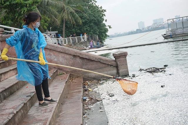 Nữ tình nguyện viên tham gia vớt cá cùng công nhân môi trường trong sáng nay.