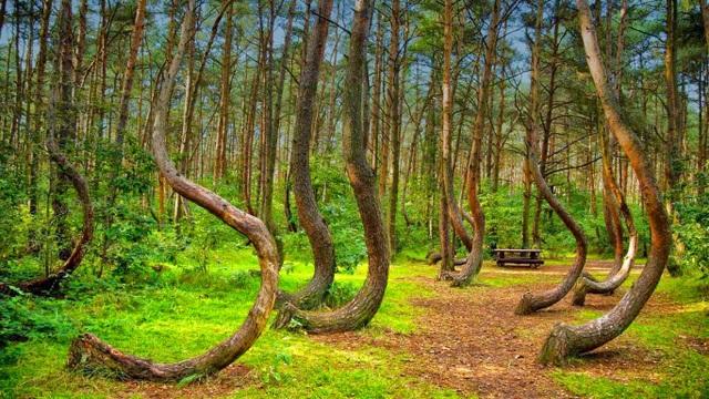 Khu rừng Crooked là điểm đến kỳ lạ ở Ba Lan