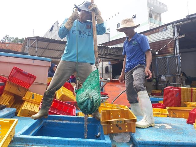 Thời điểm này, sản lượng khai thác hải sản của nhiều tàu cá chỉ bằng 1/3 so với những năm trước