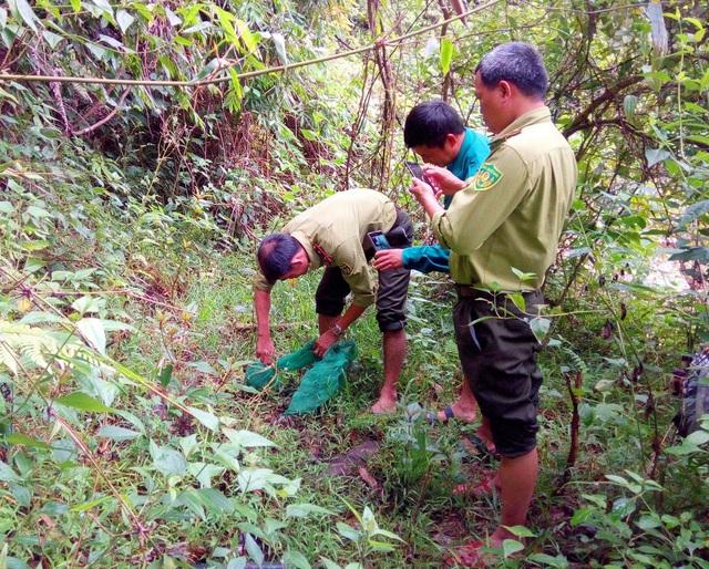 Lực lượng kiểm lâm thả tê tê Java về rừng