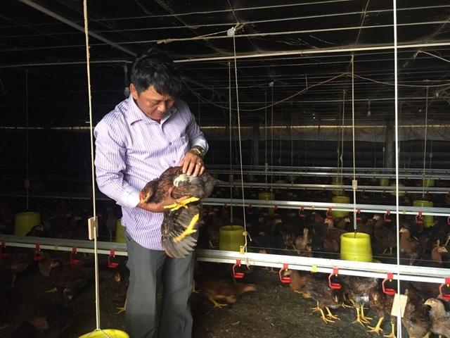 Anh Cẩn tuân thủ triệt để quy trình chăn nuôi khép kín, hạn chế đến mức thấp nhất khả năng phát sinh dịch bệnh giúp đàn gà phát triển tốt