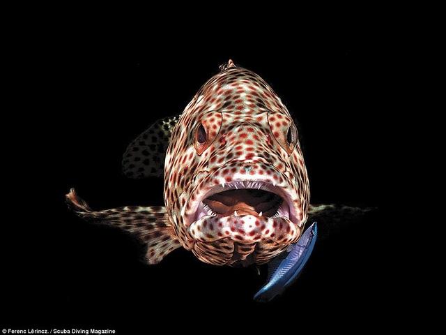 Thổi bay tâm trí với những bức ảnh chiến thắng trong cuộc thi ảnh dưới nước - 9