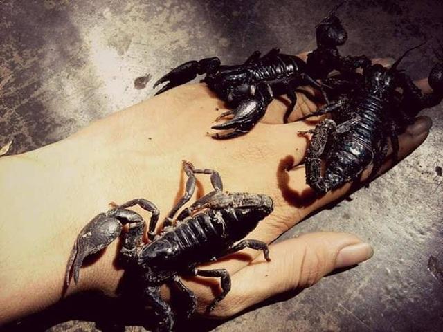 """Rùng mình với bộ sưu tập 12 thú cưng """"độc lạ"""" của 10x Khánh Hòa - 12"""