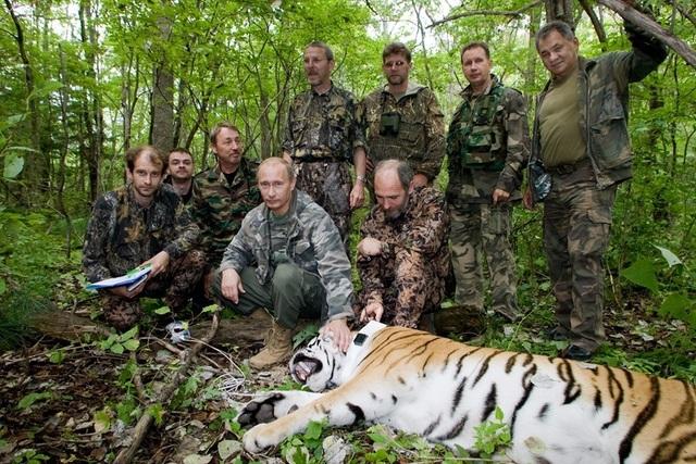 Ông Putin tới thăm khu bảo tồn Ussuri và ngồi cạnh con hổ bị bắn thuốc mê (Ảnh: RT)