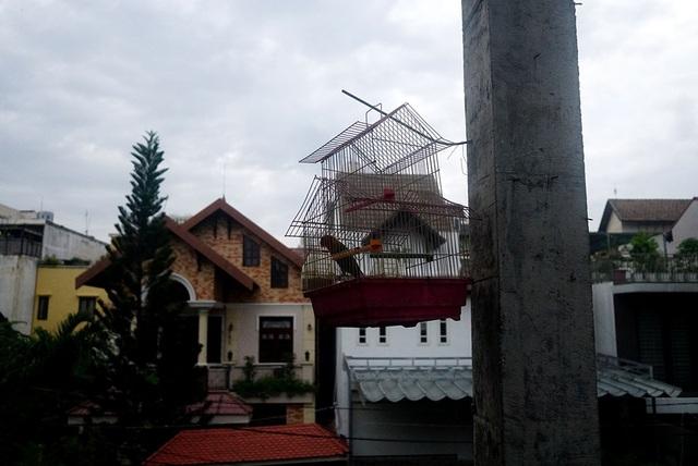 Cận cảnh nhem nhuốc của khu biệt thự bị bỏ hoang gần 10 năm giữa lòng Sài Gòn - 7