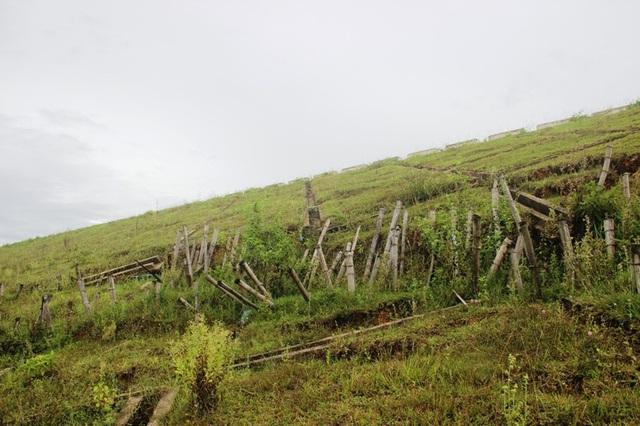 Hồ Triệu Thượng 2 bị sạt trượt được gia cố bằng cọc tre
